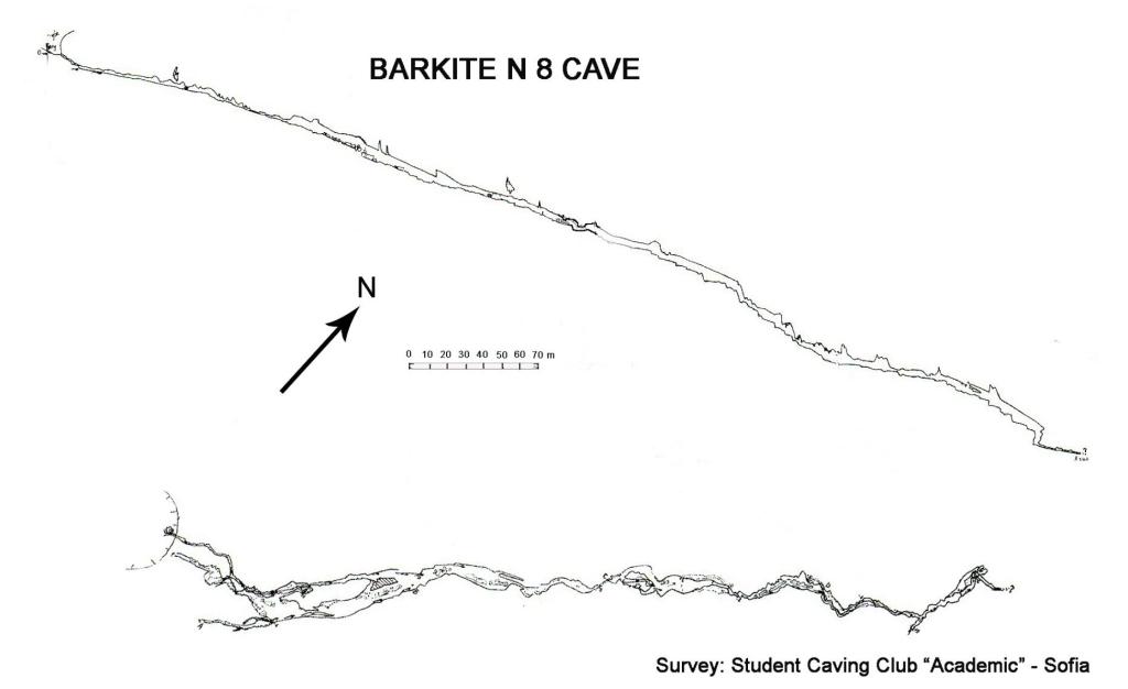 Barki 8
